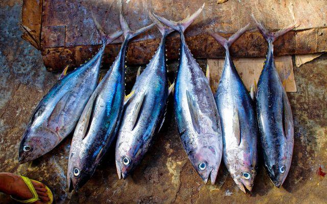Thunfisch ist begehrt, 60% der Bestände sind jedoch bereits überfischt, erste Arten bedroht.