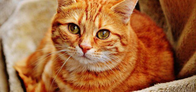 Katzenallergie