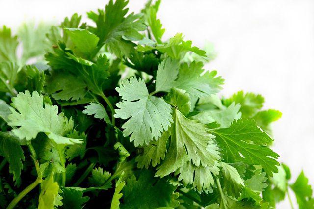 Mit Koriander-Pesto kannst du auch große Mengen Koriander haltbar machen.