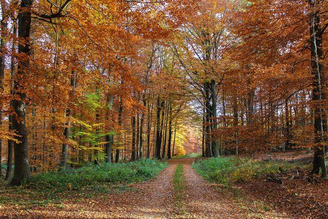 In der gemäßigten Klimazone prägen Laub- und Nadelwälder das Bild.
