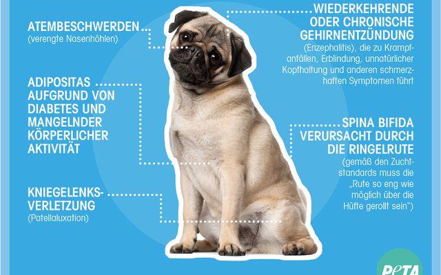 Mops, Hund, km, Klopapier, limited edition