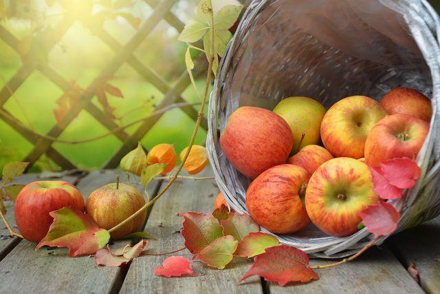In Form von Marmelade hält sich die Apfelernte weit über die Saison hinaus.