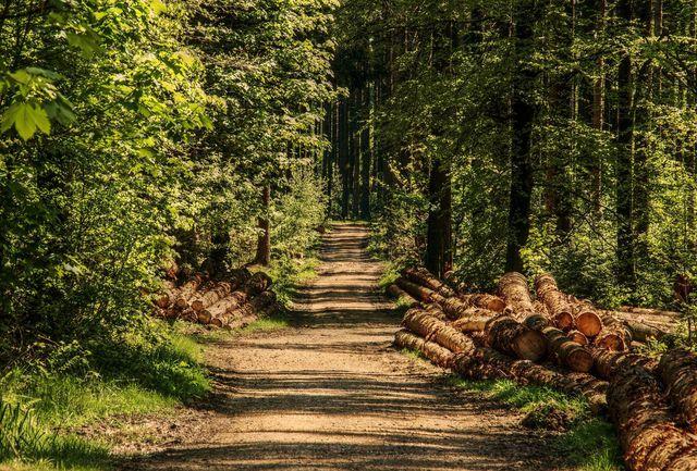 """Das Siegel """"Holz von Hier"""" schütz den heimischen Wald."""