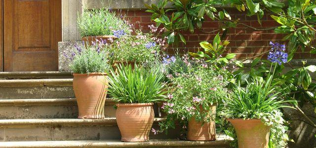 Mediterrane Pflanzen Diese Gedeihen Besonders Gut Auf Dem Balkon