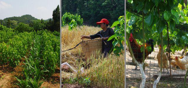 Ökologische Landwirtschaft mit Fruchtfolgen und ganzheitlicher Bewirtschaftung