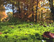 removing moss - how to kill moss in lawn