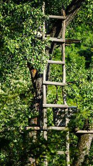 Aus einer alten Holzleiter, die an einem Baum lehnt, entsteht eine kreative Rankhilfe.