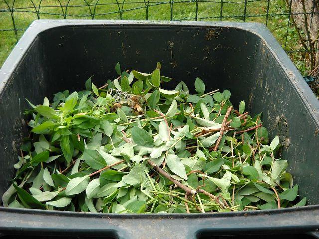 Kleine Mengen Grünschnitt kannst du in deiner Biotonne entsorgen.