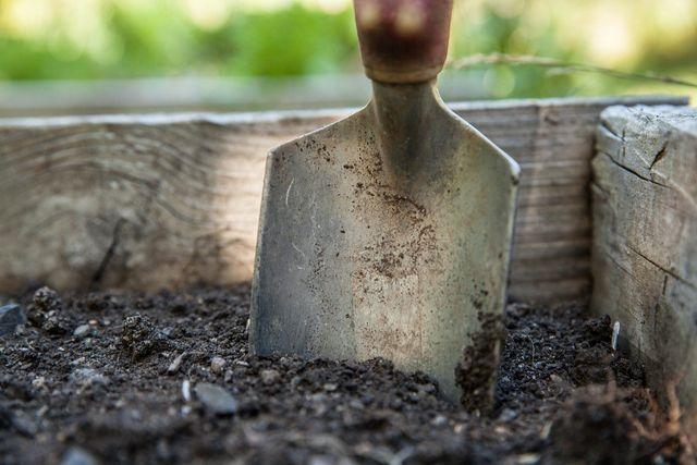 Hole die Quecken nicht einfach mit einem Spaten aus dem Boden.