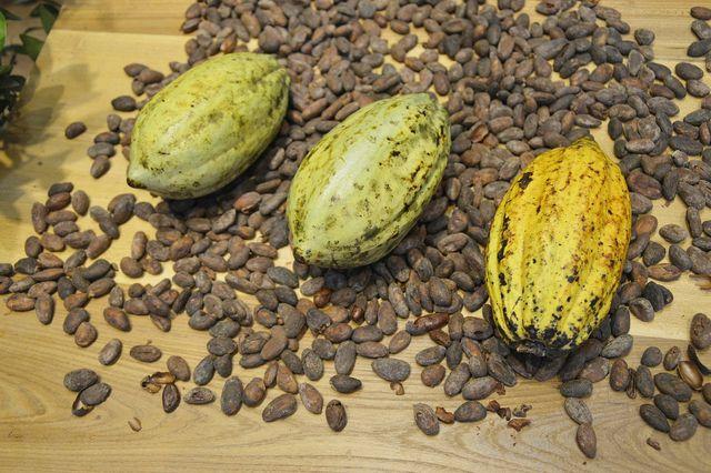Die Asche der Dudu Osun besteht aus verbrannten Schalen der Kakaofrüchte und Palmenteilen.