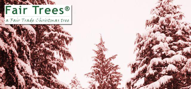 Weihnachtsbaum Kaufen Essen.Fair Trees Oder Das Dunkle Geheimnis Der Weihnachtsbäume