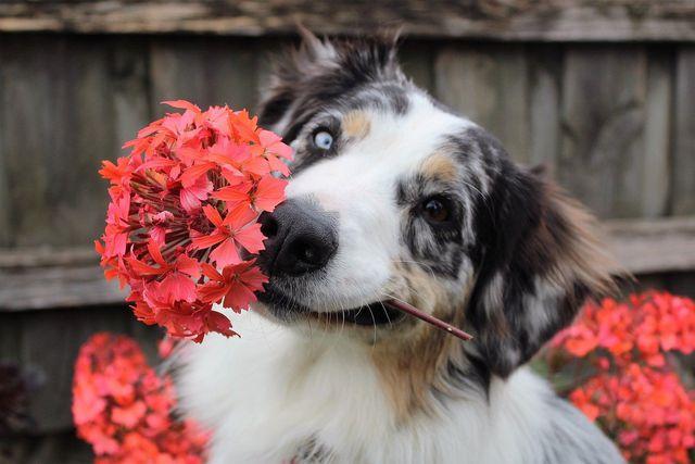 Achtung: Viele unserer Pflanzen sind giftig für Katzen und Hunde