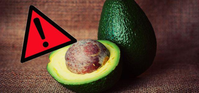 Avocado vegan