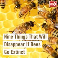 Nine Things That Will Disappear If Bees Go Extinct