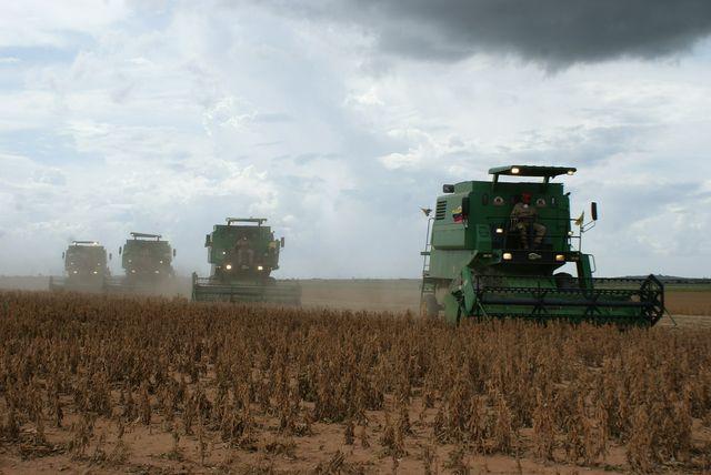 Soja wird häufig in ungesunden Monokulturen angebaut.
