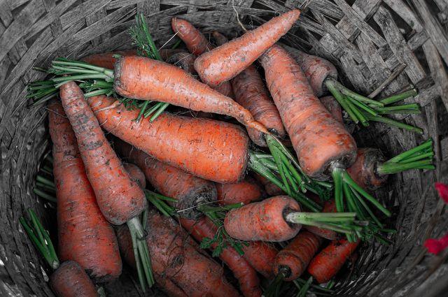 Karottenbrei eignet sich perfekt, um Beikost einzuführen.