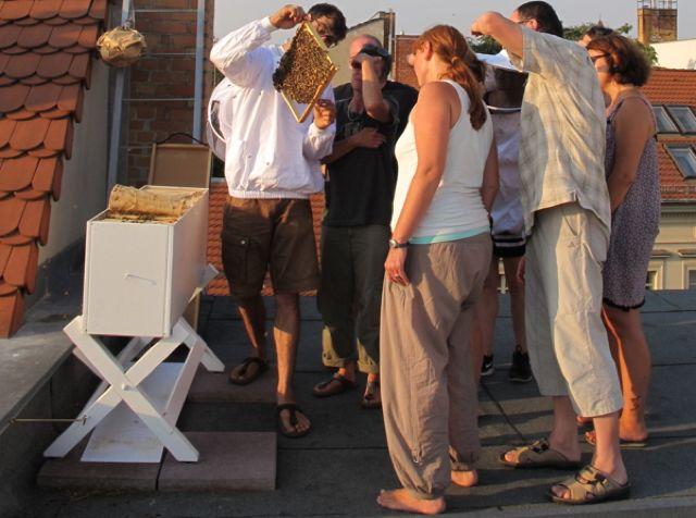imkern-hobby selber imkern in der stadt
