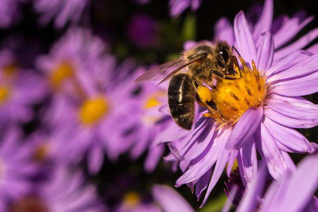 Am Standort deines Insektenhotels sollten viele blütenreiche Pflanzen wachsen.