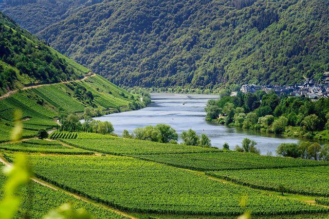 Die Gegend um die Mosel ist bekannt für ihre Weinberge.