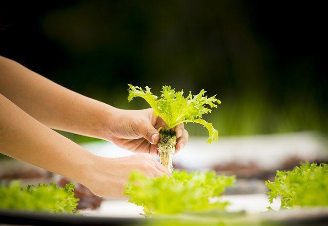 Impact Investing finanziert zum Beispiel nachhaltige Landwirtschaft.
