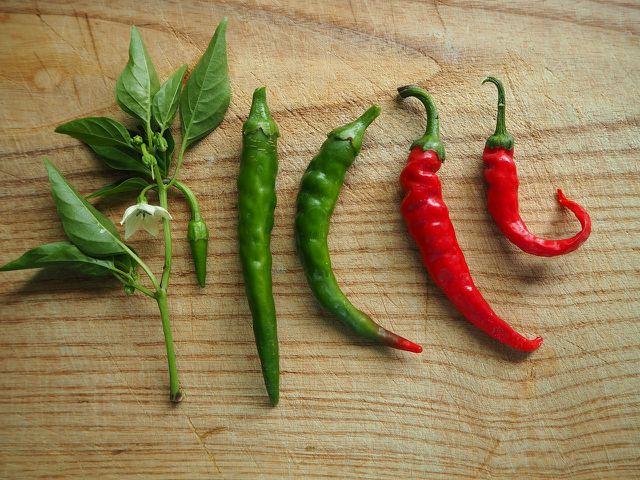 Chilis haben eine Reihe positiver Wirkungen auf Körper und Gesundheit.