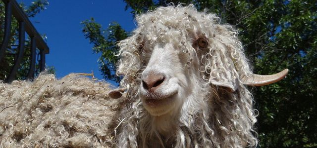 what is mohair