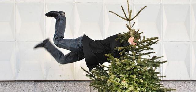 Alternativen Zum Weihnachtsbaum Bio Oko Gemietet Aus Der Region