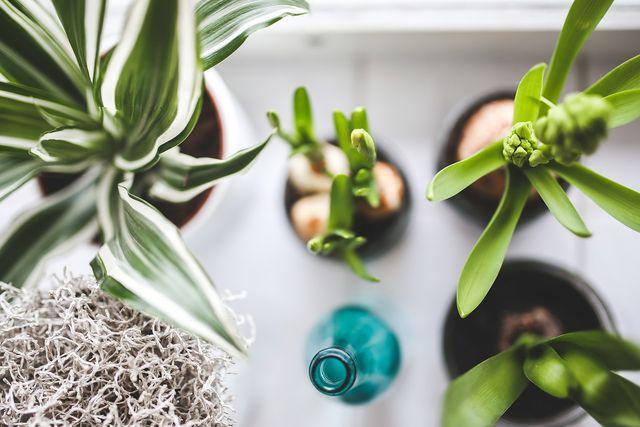 Über ihre Oberhaut geben Pflanzen bis zu 90 Prozent des Gießwassers wieder an die Luft ab.