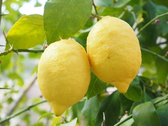 Zitronenschale und -saft sorgen in Cantuccini für eine erfrischende Note.