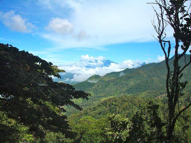 Wald in Panama