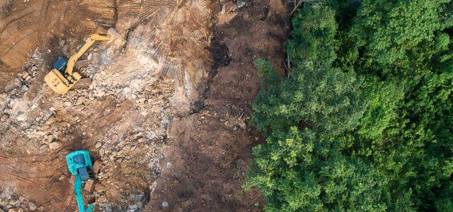 Regenwald, Nestlé, McDonald's, Adidas, Amazon, Global Canopy