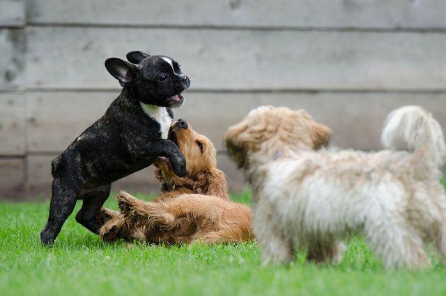 Hunde aus dem Tierheim haben ganz unterschiedliche Charaktere.