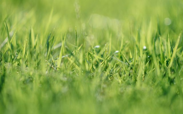 organic weed killer how to kill weeds naturally lawn weeds
