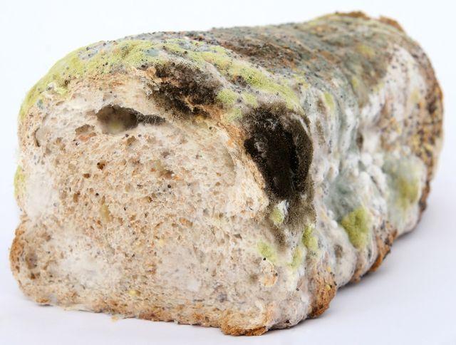 Brot solltest du immer ganz wegwerfen, auch wenn nur eine kleine Stelle schimmelt.