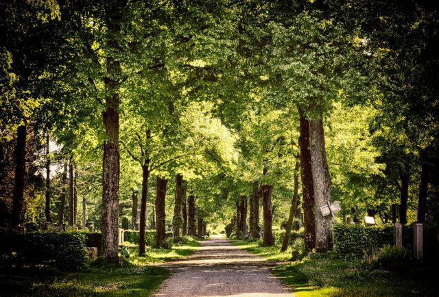 Bio-Urnen werden vorrangig in sogenannten Friedwäldern beigesetzt.