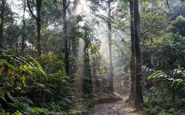 Palmöl umweltschädlich