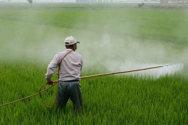 Einsatz von Pestiziden