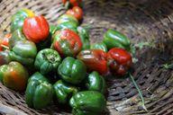 Auch schrumpelige Paprika kannst du noch essen – sie hat aber weniger Nährstoffe.