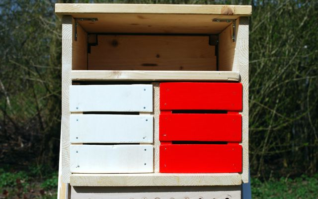 bug hotel rooms