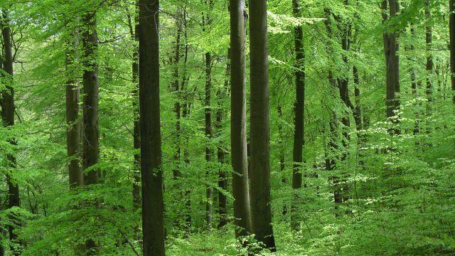 Damit der Wald nachhaltig bewirtschaftet werden kann, muss sich in der Forstindustrie einiges verändern.