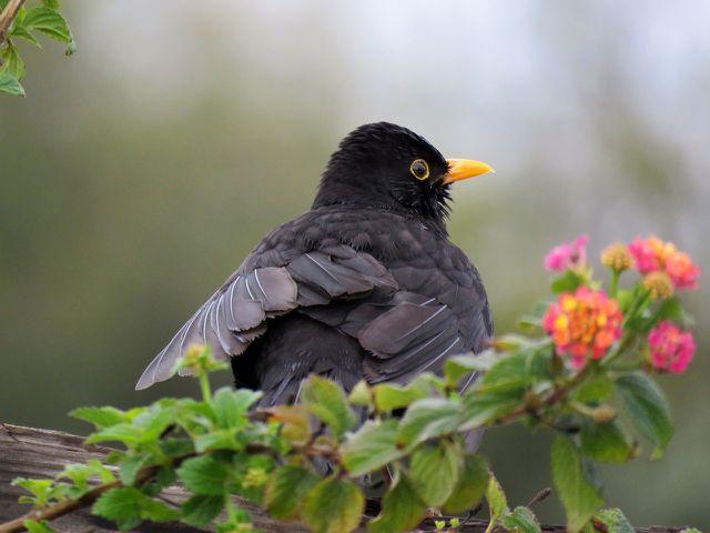 Nicht nur Vögeln bietet die Vogelbeere Nahrung und Lebensraum.