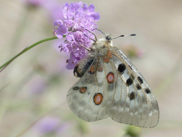 Verschwinden die Blühstreifen, sind viele Tierarten gefährdet.