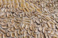 Steinpilze in Scheiben schneiden