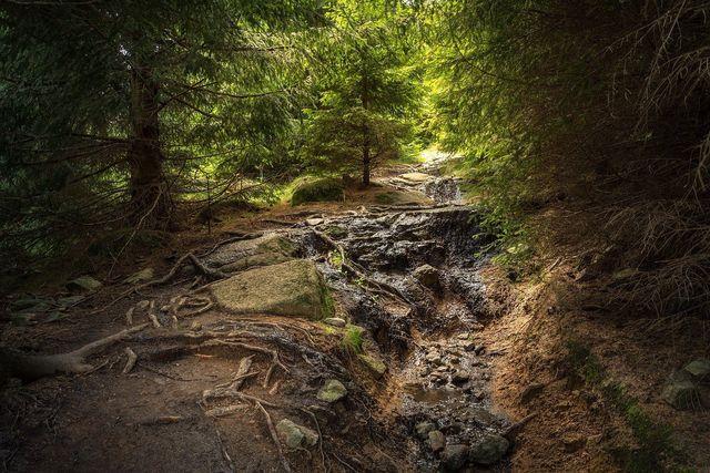 In Nationalparks wirkt die Natur ursprünglich und wild.