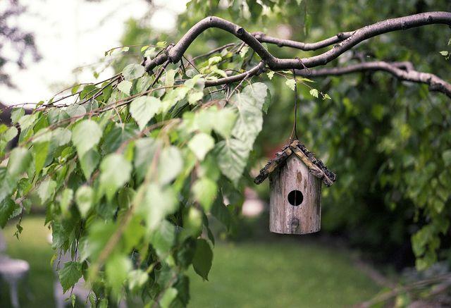 Vogelhäuser und Nisthilfen locken Vögel an, die einem Befall durch Frostspanner vorbeugen können.