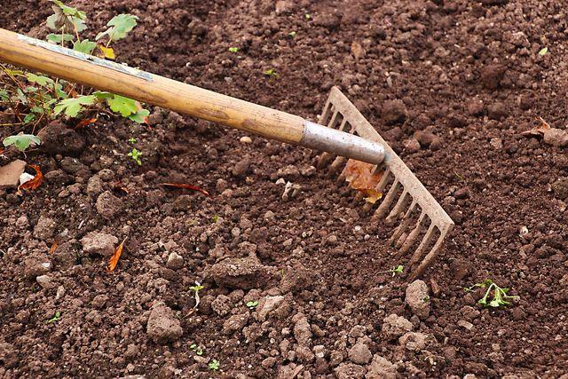 Das Beet sollte frei von Unkraut sein, bevor du den Feldsalat säst.