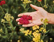 bio-blumen-bouquet bloomon