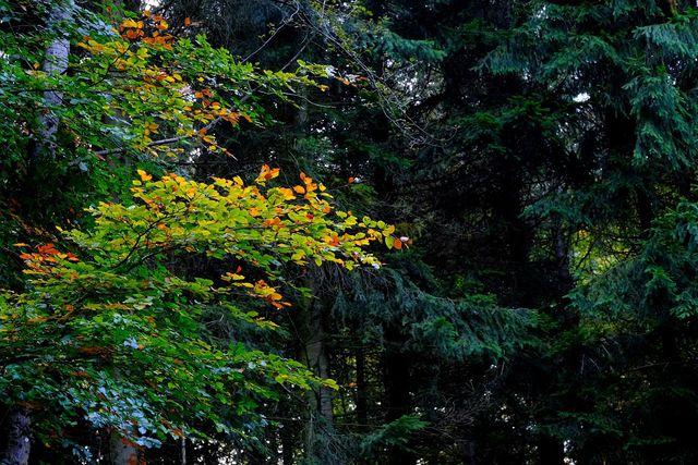 Mischwälder mit Laub- und Nadelbäumen ermöglichen eine große Artenvielfalt.