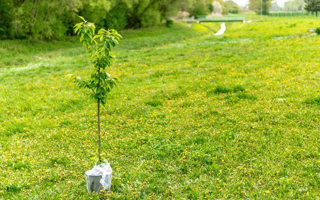 Nachhaltig anlegen , mehr als Bäume pflanzen, Greenwashing