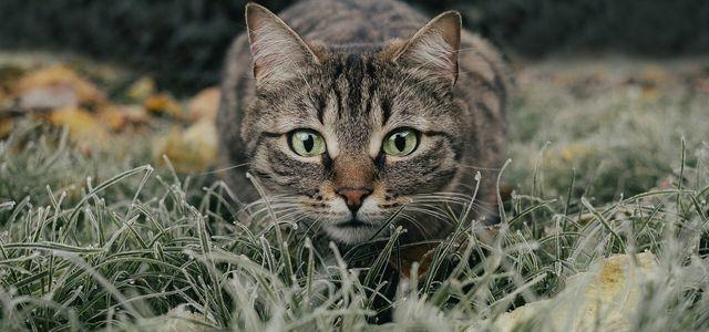 aloe vera giftig für katzen